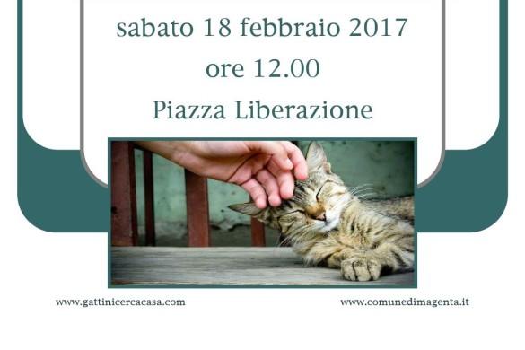 Evento 18 febbraio con associazione Gattinicercacasa
