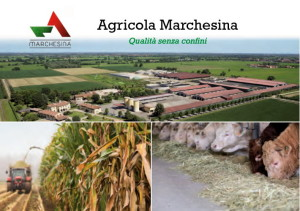 Marchesina