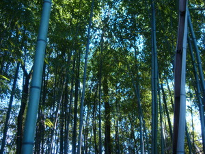 bella1 - bambu