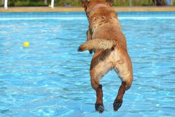 cane_piscina